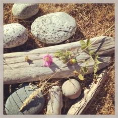 findings, Washington Coast