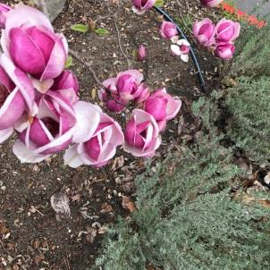 spring in Calistoga